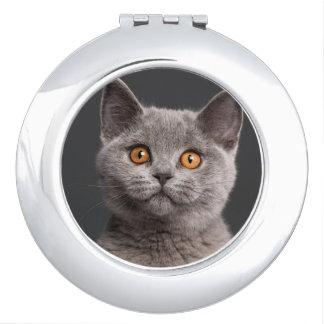 British Shorthair kitten (3 months old) Compact Mirror
