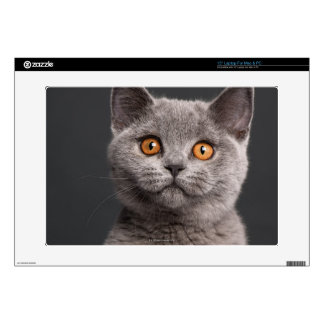 "British Shorthair kitten (3 months old) Decal For 15"" Laptop"