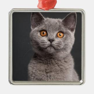 British Shorthair kitten (3 months old) Metal Ornament