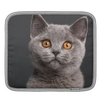 British Shorthair kitten (3 months old) Sleeve For iPads