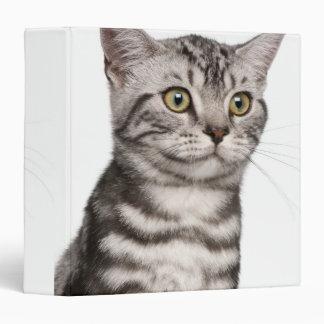British Shorthair kitten (4 months old) 3 Ring Binder