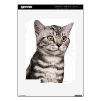 British Shorthair kitten (4 months old) iPad 3 Decal