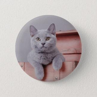 British shorthair kitten button