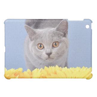 British shorthair kitten cover for the iPad mini