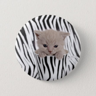 British shorthair kitten in mug button