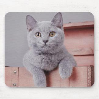 British shorthair kitten mouse pad