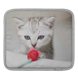 British shorthair kitten smelling toy mouse iPad sleeve