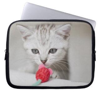 British shorthair kitten smelling toy mouse laptop sleeve