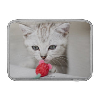 British shorthair kitten smelling toy mouse MacBook air sleeves