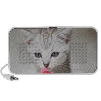 British shorthair kitten smelling toy mouse speaker