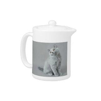 British shorthair kitten teapot
