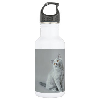 British shorthair kitten water bottle