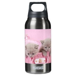 British shorthair kittens insulated water bottle