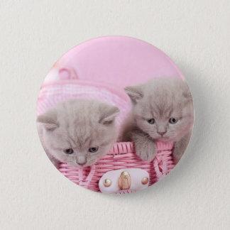 British shorthair kittens pinback button