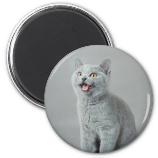 British shorthair kitty fridge magnet
