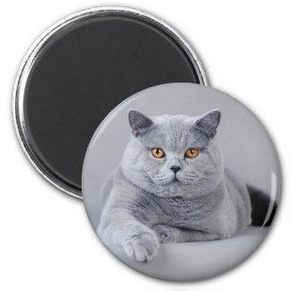 British shorthair fridge magnets