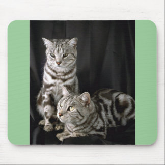 British Shorthair, silver tabby Mouse Pad
