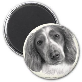 Britt, Welsh Springer Spaniel Magnet