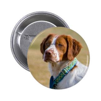 Brittany dog beautiful photo round button