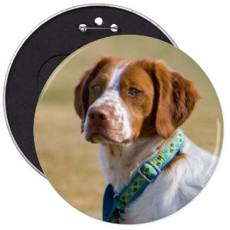 Brittany dog beautiful photo round button
