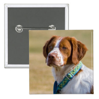 Brittany dog beautiful photo square button
