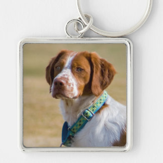 Brittany dog beautiful photo square keychain