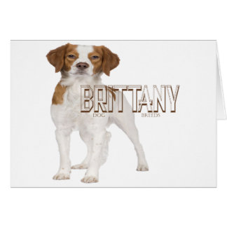 Brittany dog breeds  ブルターニュ犬の品種 card
