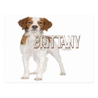 Brittany dog breeds  ブルターニュ犬の品種 postcard