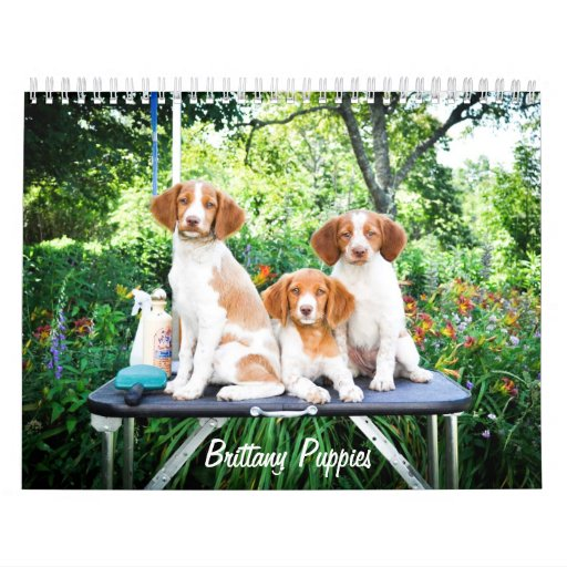 Brittany Puppies Calendar