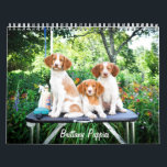 """Brittany Puppies Calendar<br><div class=""""desc"""">A collection of photos of the puppies of New Horizon Brittanys in Maine.</div>"""