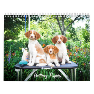 Brittany Puppies Calendar