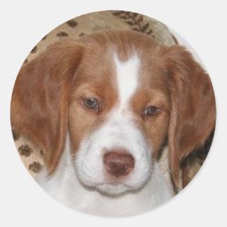 Brittany Puppy Classic Round Sticker
