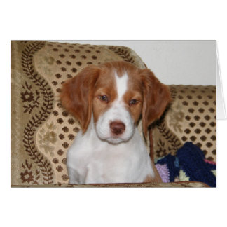 Brittany Puppy Notecard