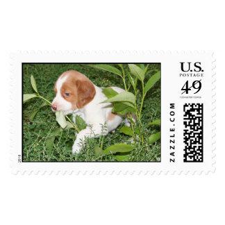 Brittany Puppy Postage