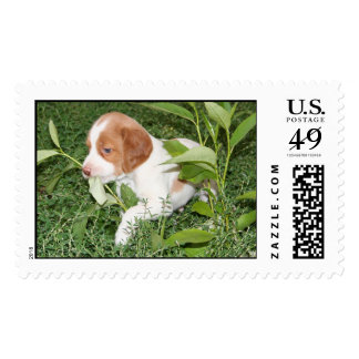 Brittany Puppy Postage Stamps