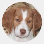 Brittany Puppy Round Stickers