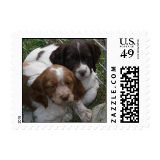 Brittany puppy sisters stamp