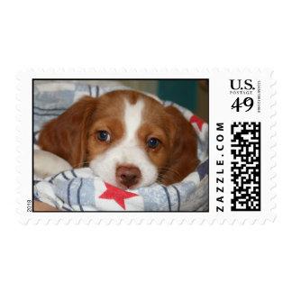 Brittany Puppy Stamp