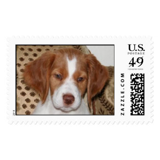 Brittany Puppy Stamps
