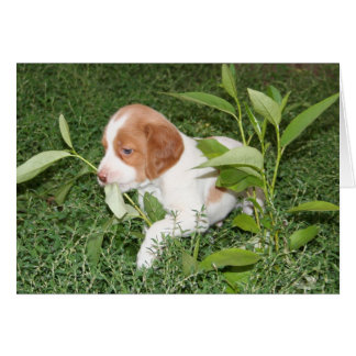Brittany Puppy with grass Notecard Stationery Note Card