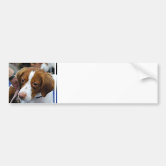 Brittany Spaniel  Bumper Sticker