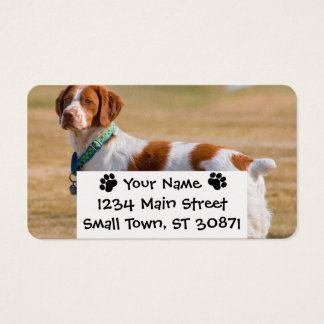 Brittany Spaniel Dog Beautiful Business Card