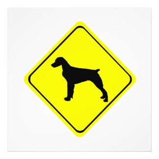 Brittany Spaniel Dog Caution or Crossing Sign Photo
