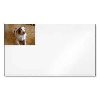 brittany spaniel laying magnetic business card