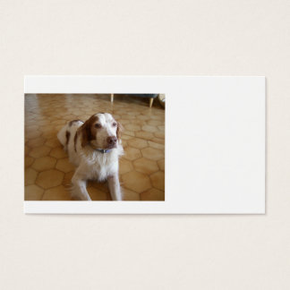 brittany spaniel laying.png business card
