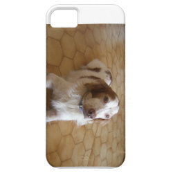 Case-Mate Vibe iPhone 5 Case with Brittany Spaniel Phone Cases design