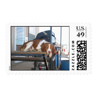 Brittany Spaniel: Lazy Dog Afternoon Postage Stamp