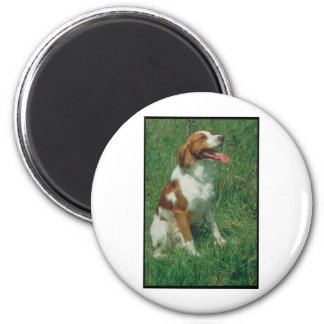 Brittany Spaniel Refrigerator Magnets