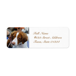 Brittany Spaniel Mailing Labels