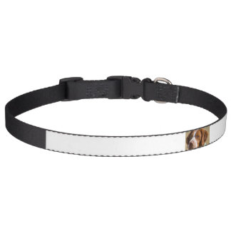 brittany spaniel pet collar